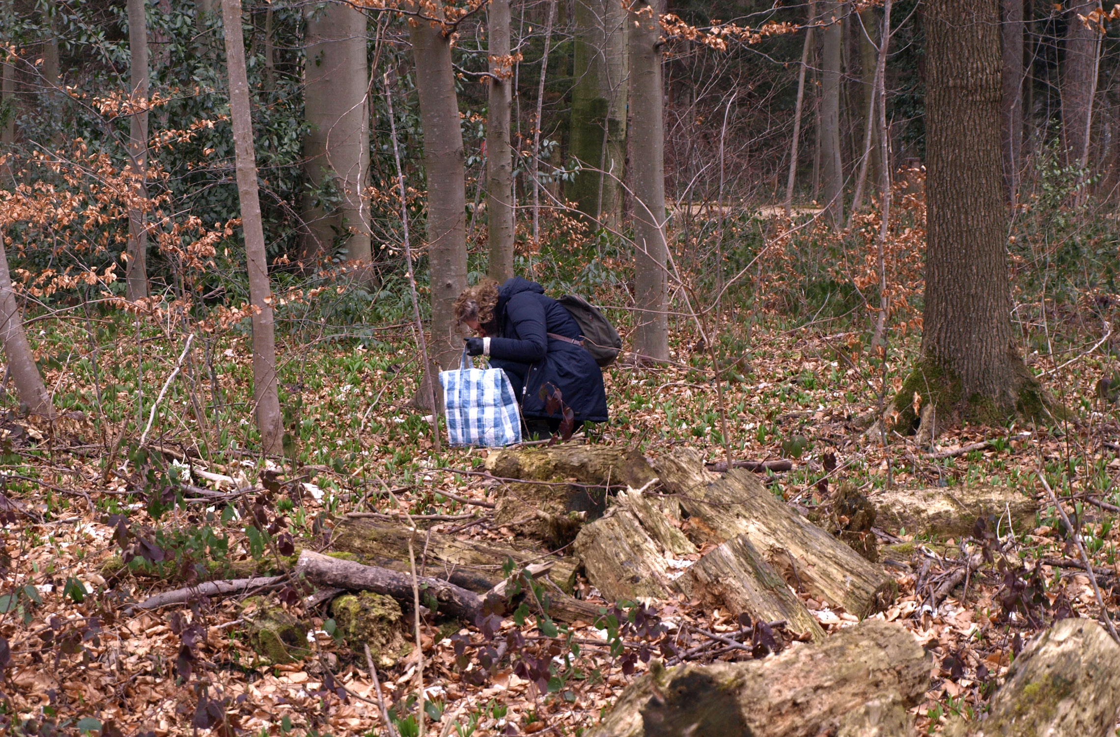 P. collecting pieces of nature in the forest (Zürich)